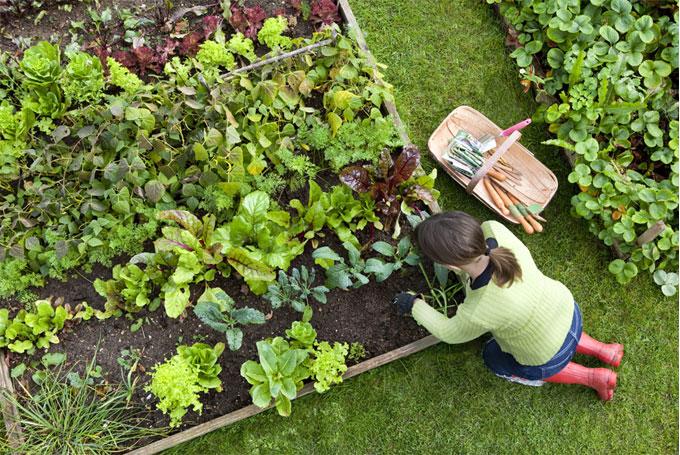 سبزیجات در باغ ویلا