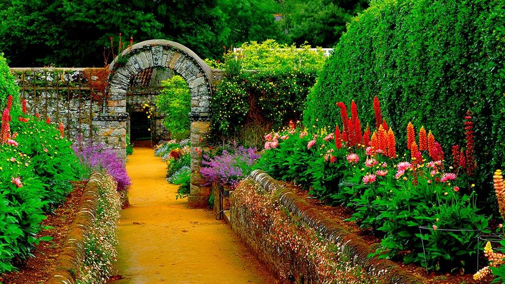 گیاهان محوطه ای برای باغ ویلا
