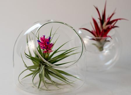 گیاهان هوازی در باغ ویلا